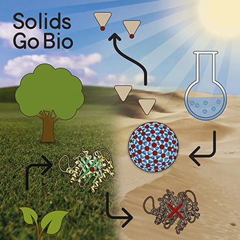 Solids Go Bio! Enzymes belong to the most efficient catalysts known to man, but their high production costs and low stability cause severe problems. Inorganic nanoparticles on the other hand are readily available by cost-efficient synthesis and are more stable compared to their natural counterpart. In recent years, an enormous amount of inorganic nanomaterials with intrinsic enzymatic activities has been reported, which is summarized in this microreview with cover page and cover profile.